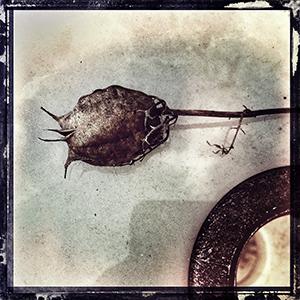 """""""Seed Pod"""", copyright  Jon Lisbon"""